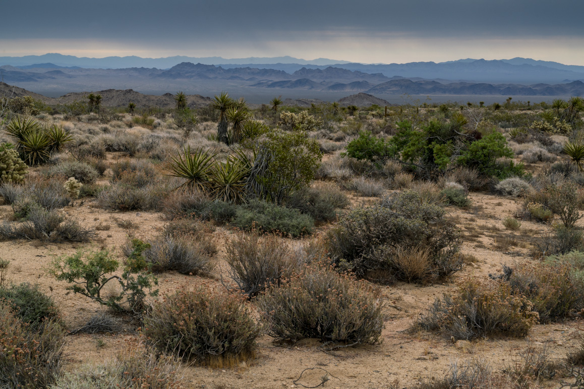 A view looking east towards Ward and Chemehuevi Valleys from the Old Woman Mountains Preserve. Photo: Kim Stringfellow.