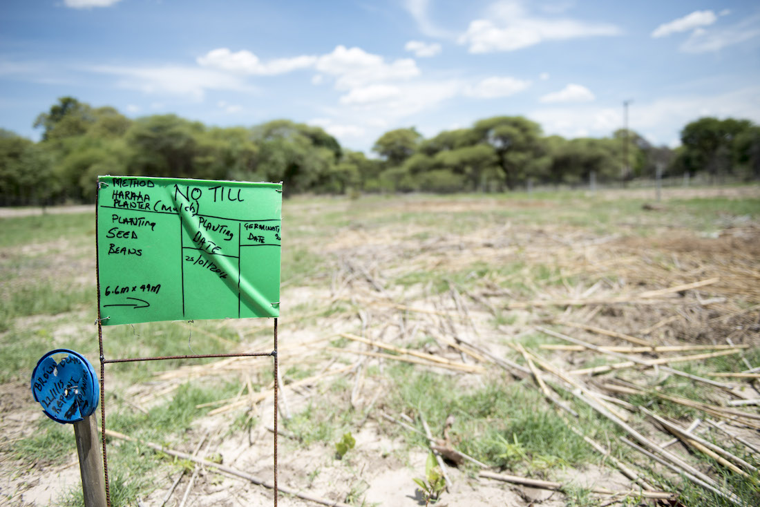 """No till"" field in Southern Africa"