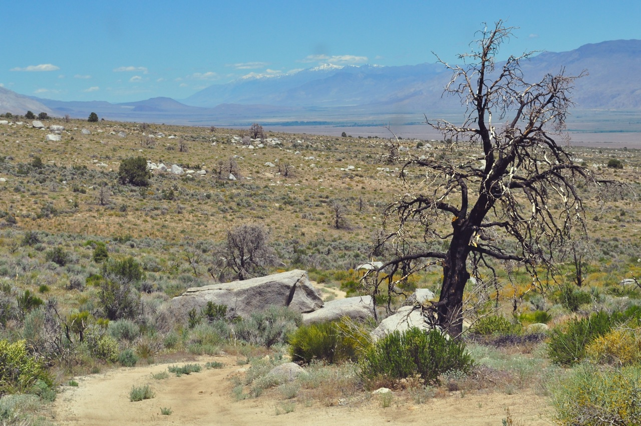 Near Lone Pine Campground