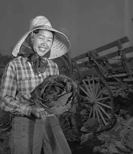 Chiyeko Suzumoto harvest red cabbage at a truck farm in Gardena, 1951 | Courtesy of Angel City Press