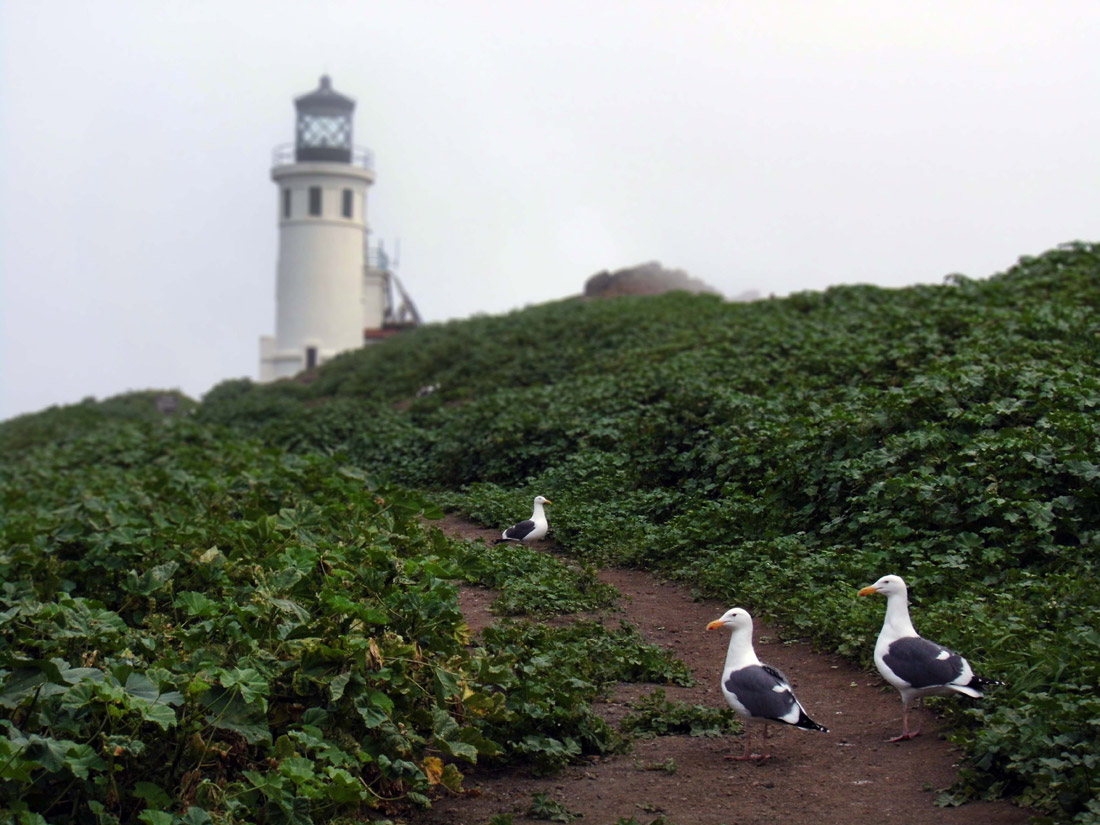 Anacapa Island: Lighthouse