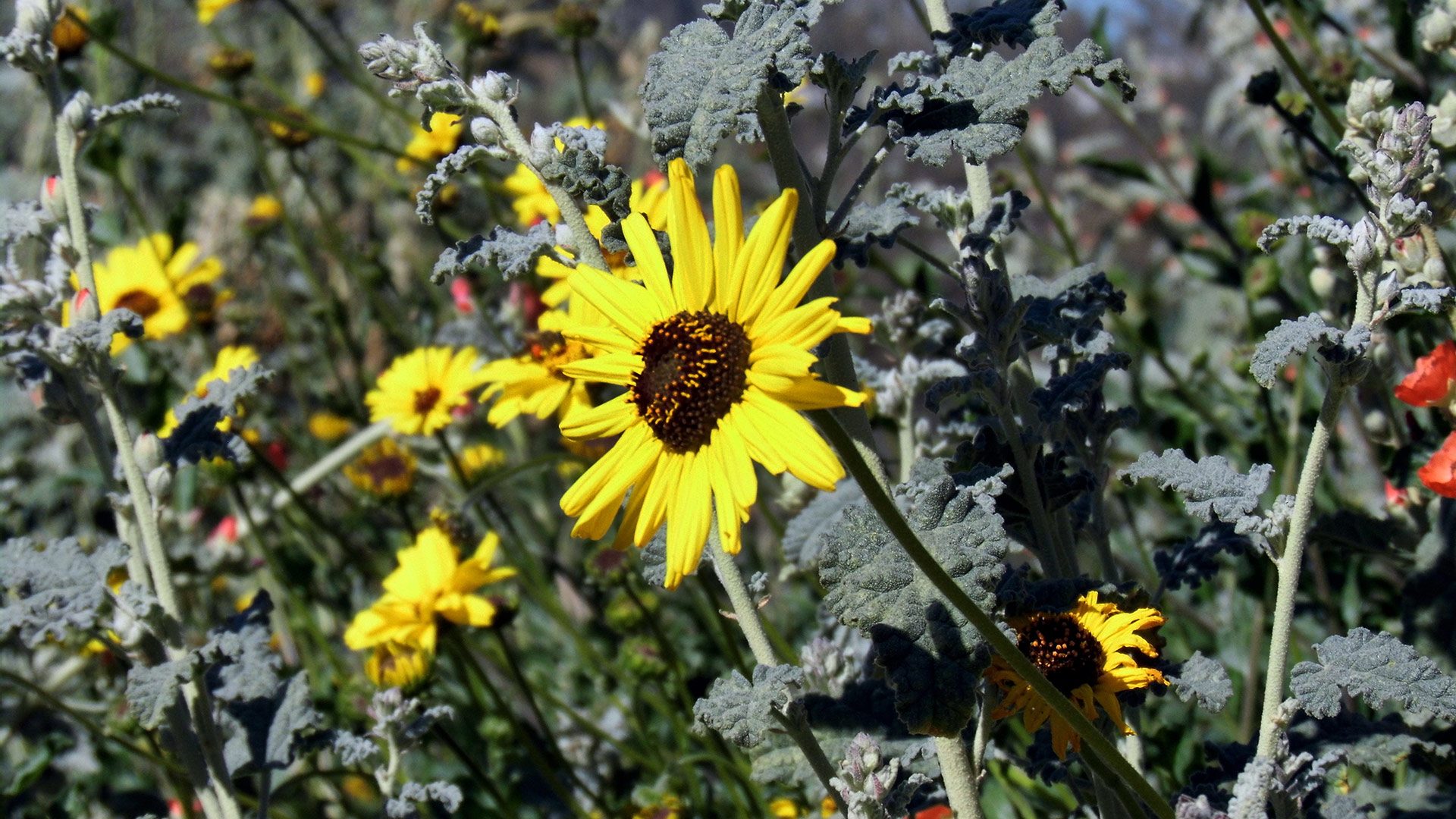 A sunflower at Rio de Los Angeles State Park. | Sandi Hemmerlein