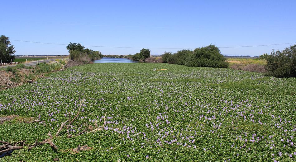Delta Estuary, Flowers