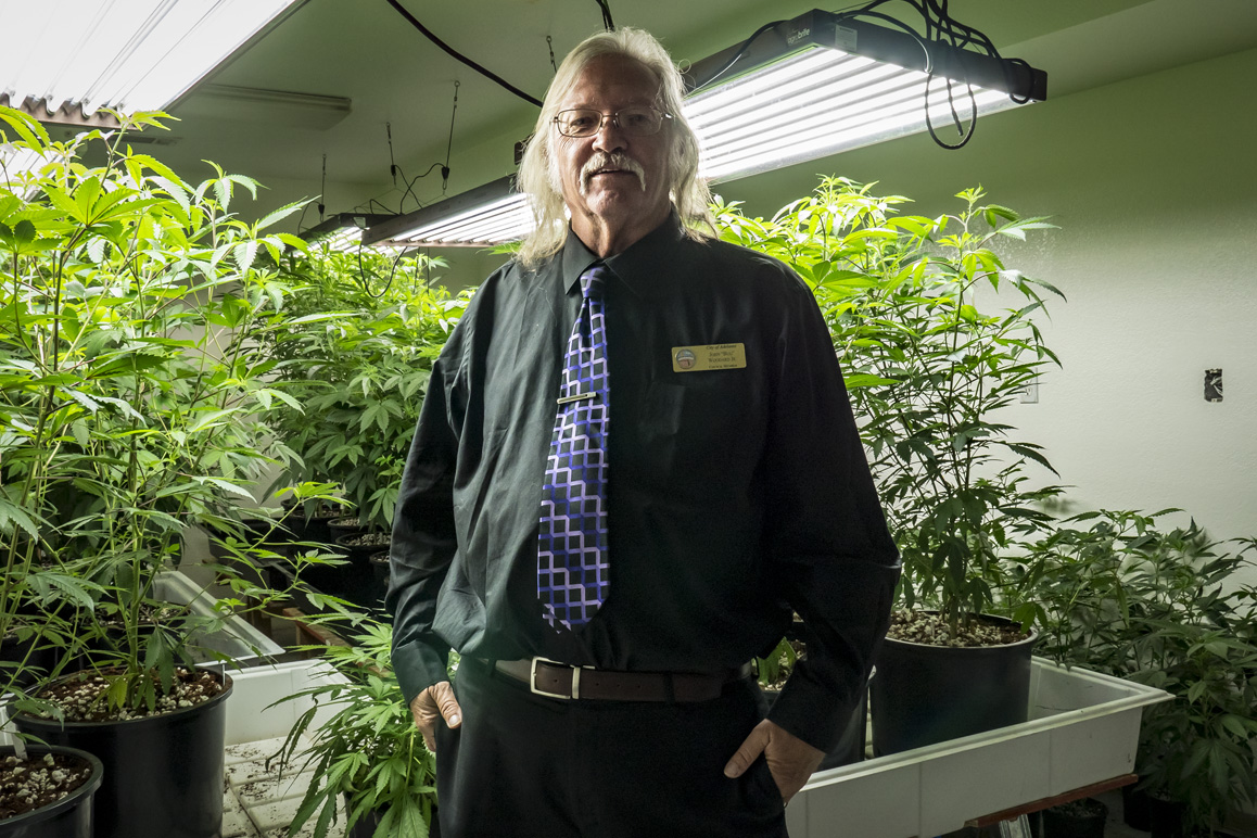 "Adelanto councilman John ""Bug"" Woodard pictured with a local grower's ""mother trees"" that will be later cloned for large-scale marijuana cultivation. Photo: Kim Stringfellow."