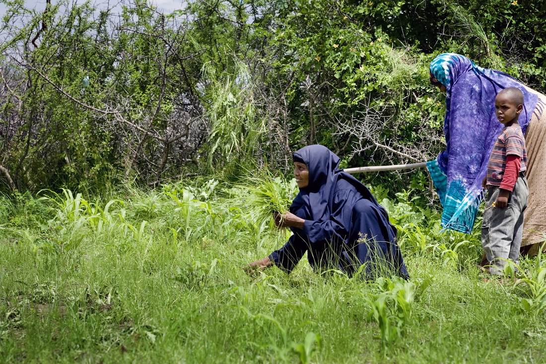 Africa Food Security AUS Aid. Somalia.