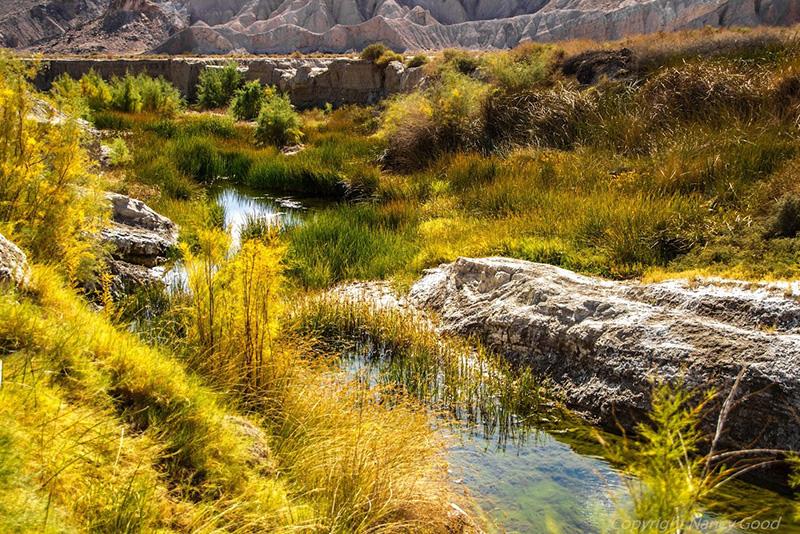 amargosa-river-9-14-16.jpg