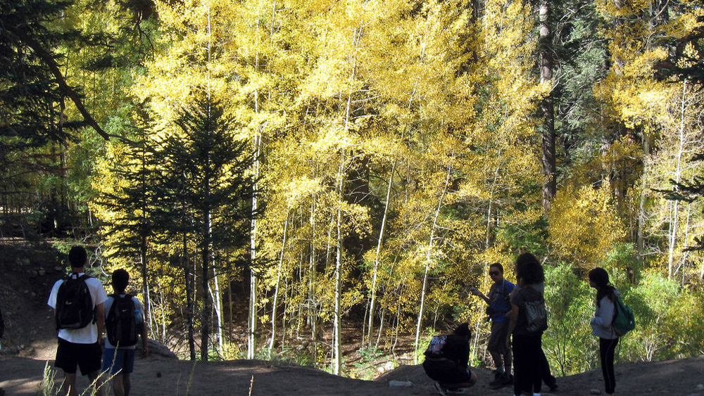 California's southernmost aspen grove, in Sand to Snow N.M. | Photo: Mitch Barrie, some rights reserved