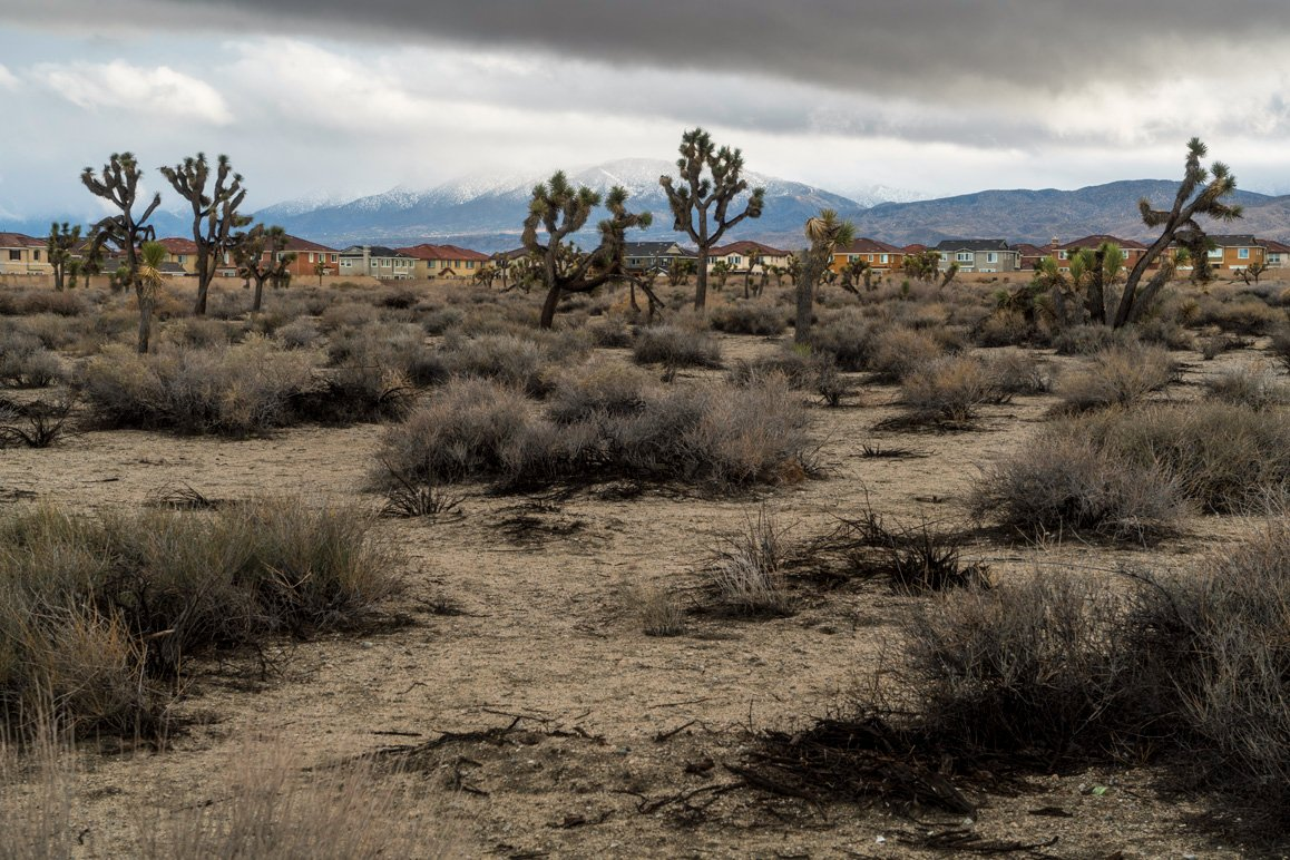 An Antelope Valley tract home development with undeveloped Joshua tree woodland in the foreground. | Kim Stringfellow © 2017.