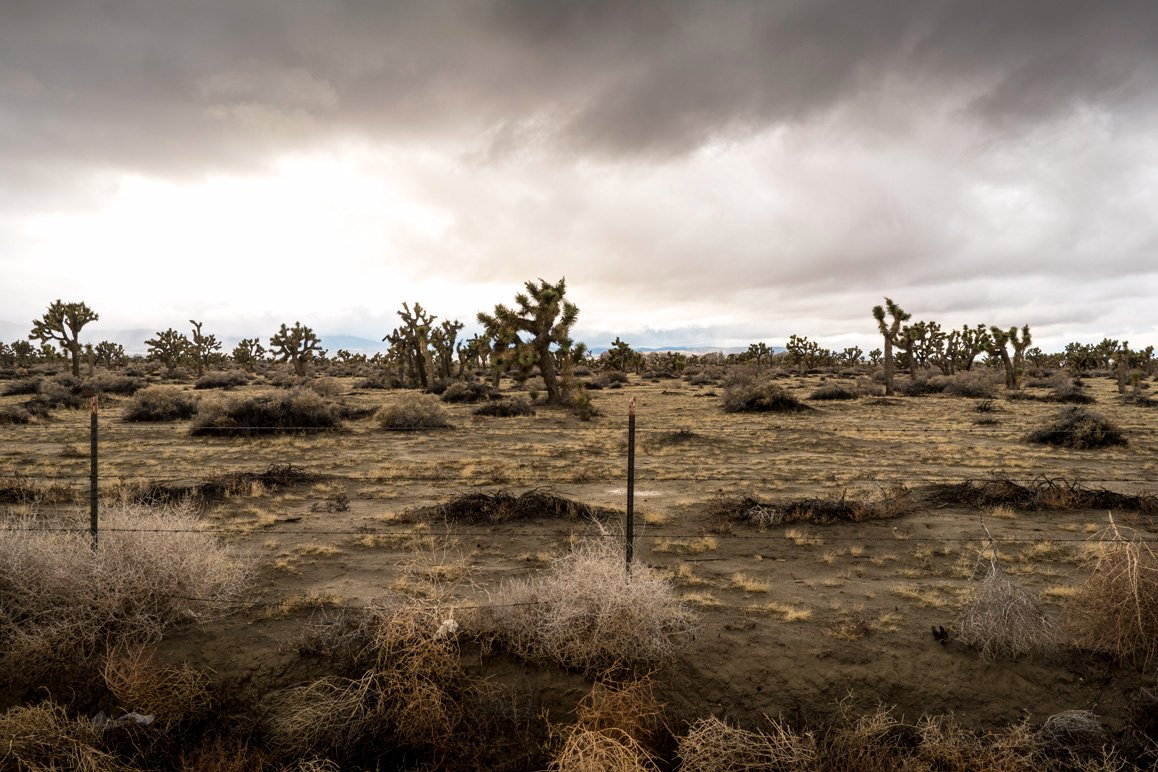 Looking west and directly opposite of the previous photograph shot along Avenue 50 shows undeveloped Joshua tree woodland. | Kim Stringfellow © 2017
