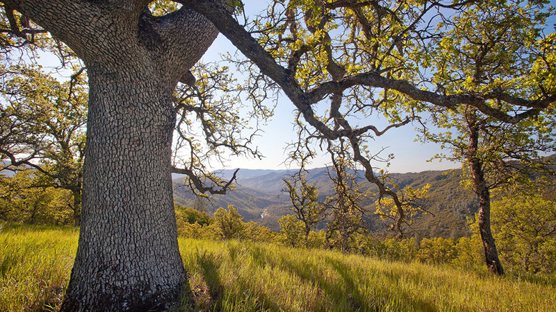 Berryessa Snow Mountain National Monument | Photo: Bob Wick/BLM