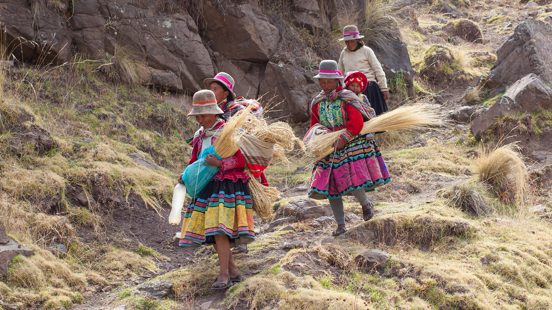 A group of women carry the native straw used to build the Q'eswachaka rope bridge in Peru.