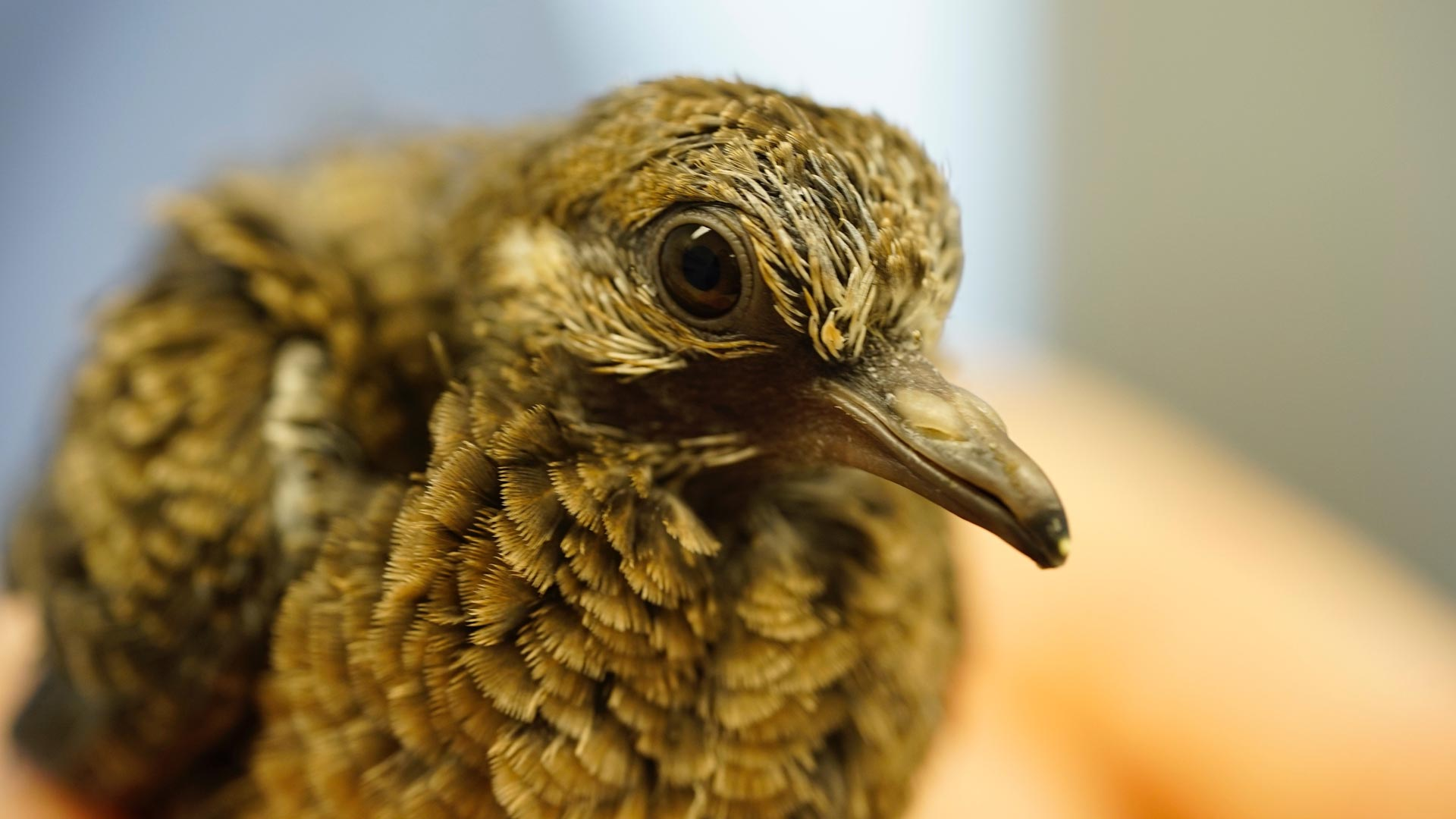 bird california wildlife center