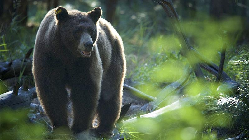 black-bear-10-14-16.jpg