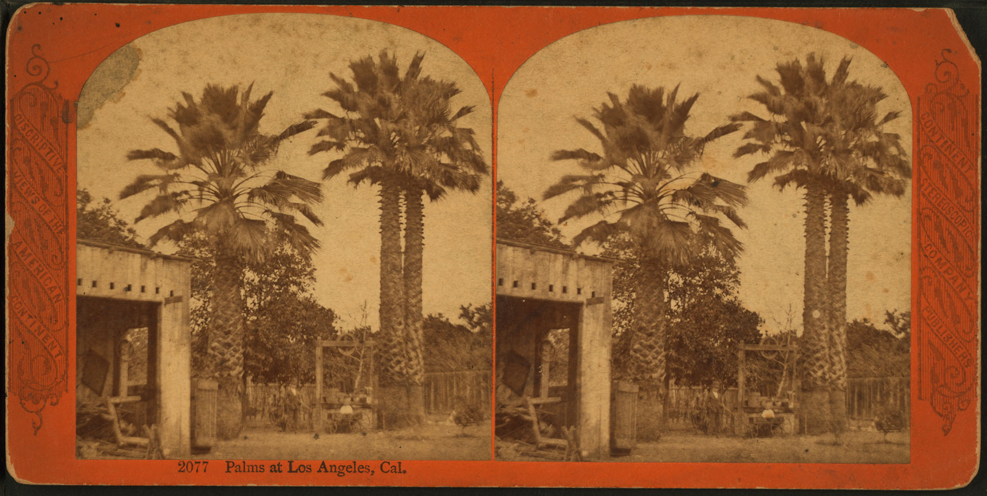 Palms at Los Angeles, Cal.