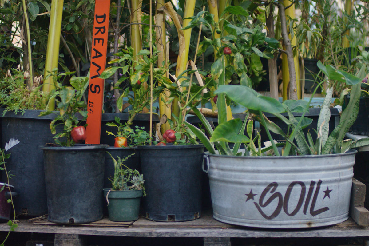 Pots and plants in Ron Finley's garden. | Still from