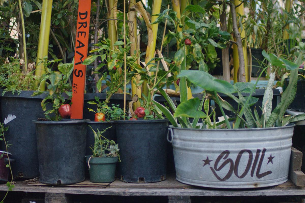 "Pots and plants in Ron Finley's garden.   Still from ""Broken Bread"""