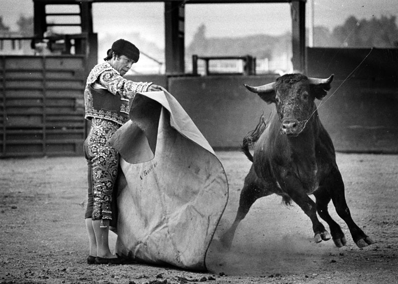 "Portuguese matador and bull in a so-called ""bloodless bullfight"" in Pico Rivera in 1980. Photo courtesy of the Herald-Examiner Collection – Los Angeles Public Library"
