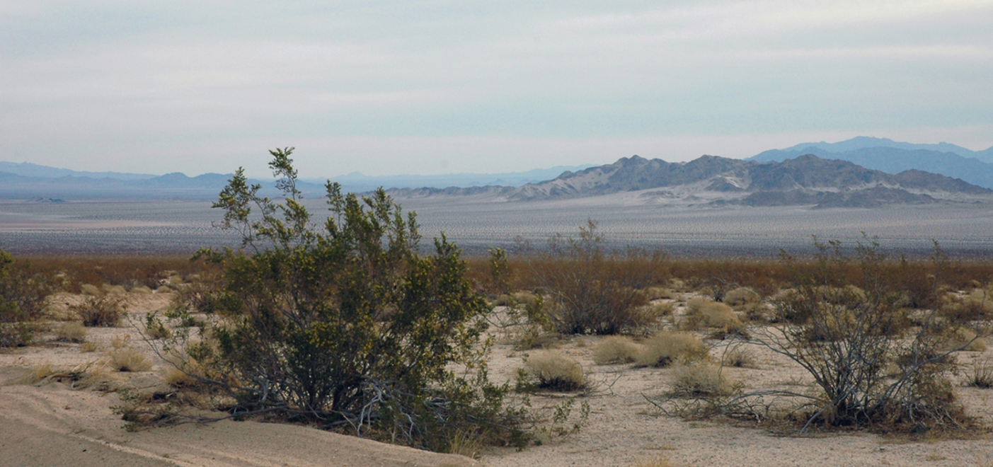 Mojave Desert, our home away from home. | Shirley Burman
