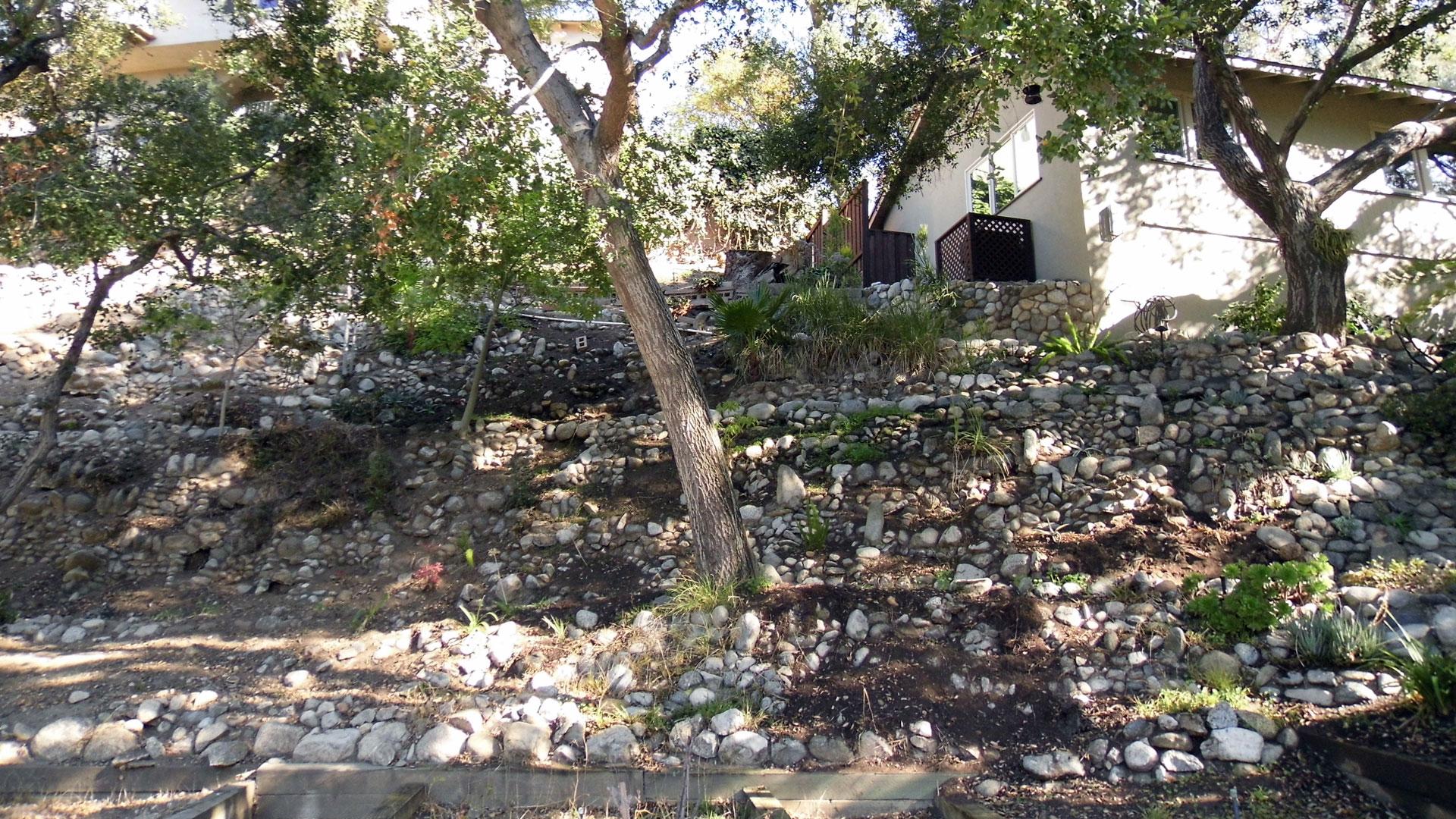 cactus wall lower garden