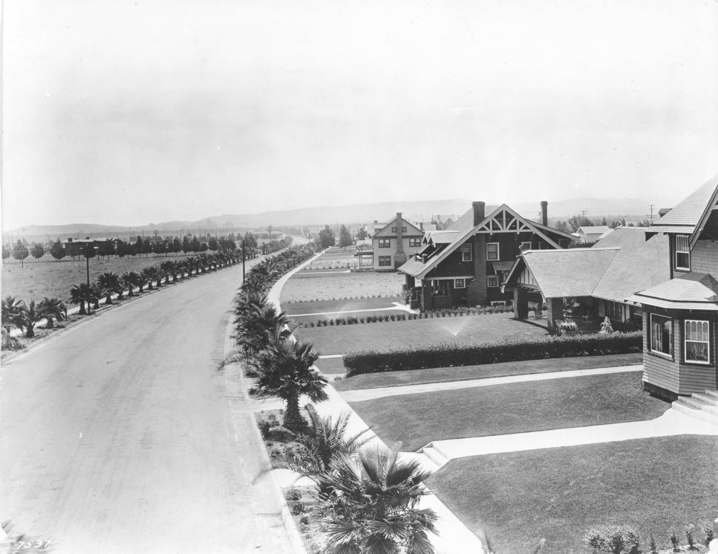 Young palms line Canon Drive in Beverly Hills, circa 1918. Courtesy of the Title Insurance and Trust / C.C. Pierce Photography Collection, USC Libraries.