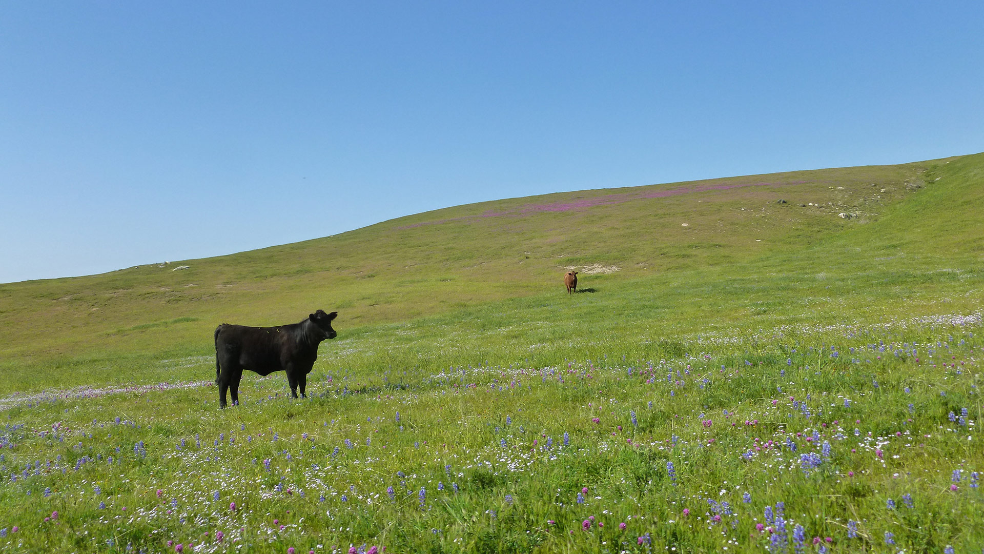How to Access Tejon Ranch, California's Largest Private