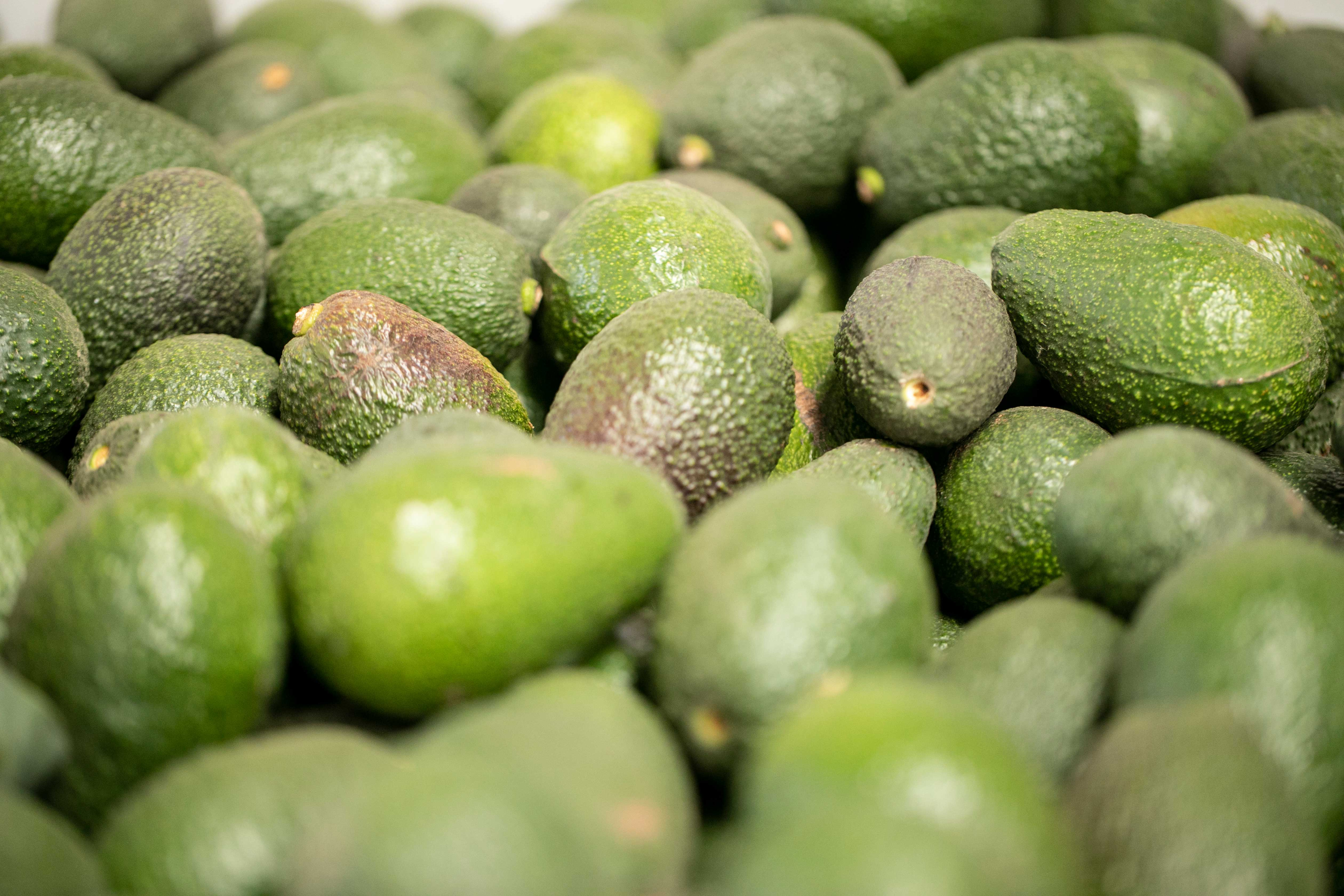 "Chile- ""Eating Water"" In Chile, the popular demand for avocados, once considered an ""exotic"" item, is having a devastating impact."