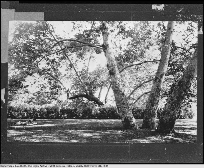 Sycamore Park 3