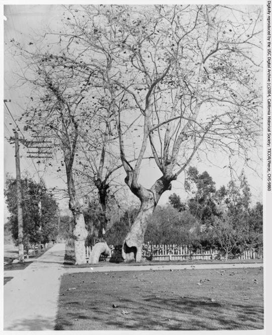 Sycamore Park 8