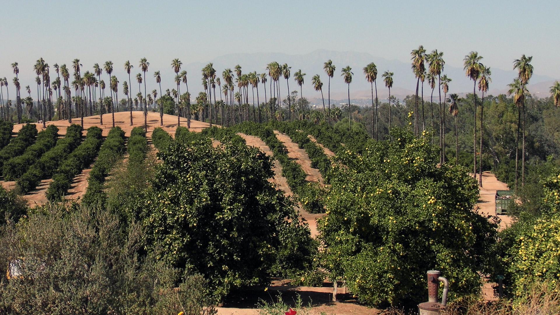 California citrus state historic park