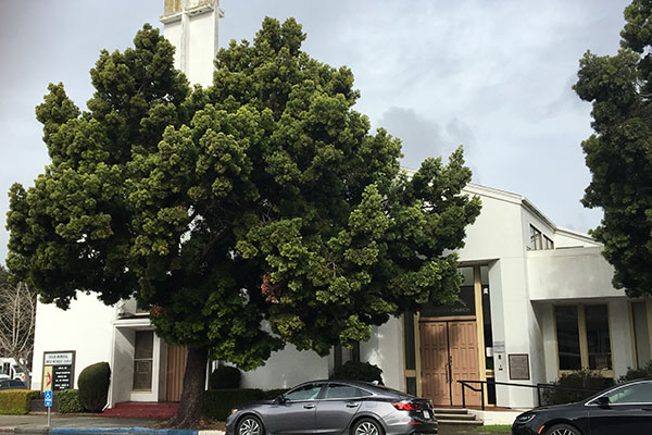 Taylor Memorial United Methodist Church | Rikha Sharma Rani