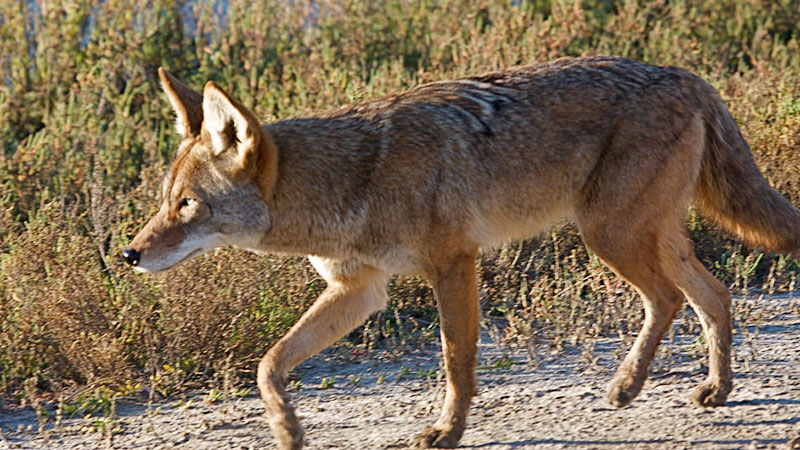 coyote chat sites Other information: register or log in to see other information: friends.