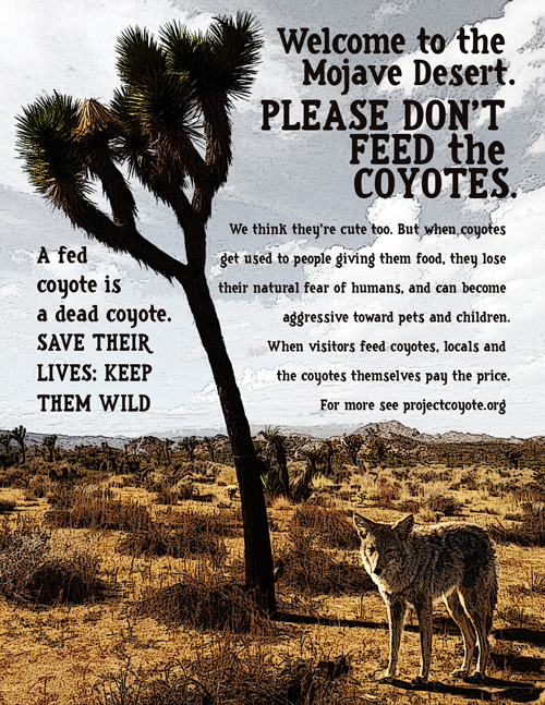 Tips for tourists on keeping coyote encounters safe | Image: Desert Ecology Education Partnership
