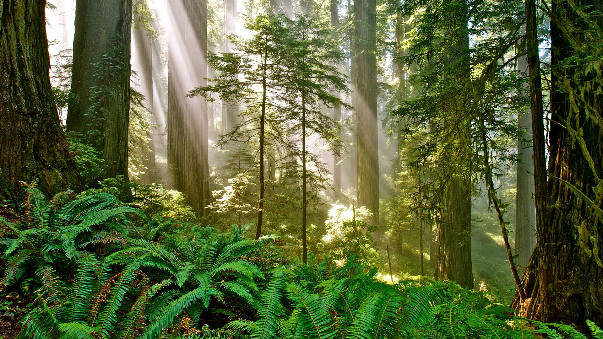 Courtesy of Del Norte Coast Redwoods State Park