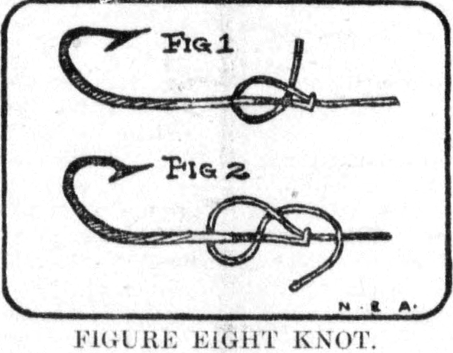 Diagram of Figure Eight Knot, Tacoma Times, May 14, 1904