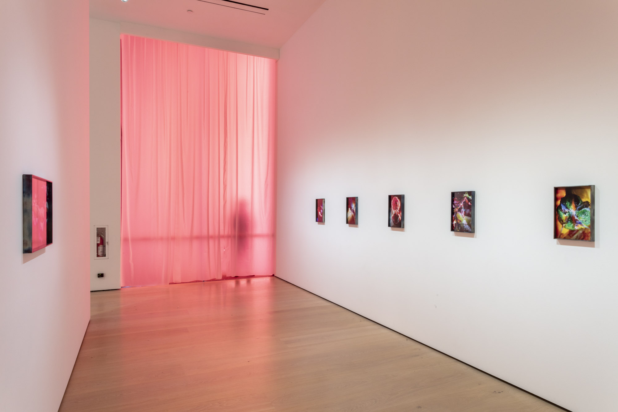 """An installation view of Diane Severin Nguyen's work at """"Made in L.A. 2020: a version."""" at Hammer Museum, Los Angeles. 