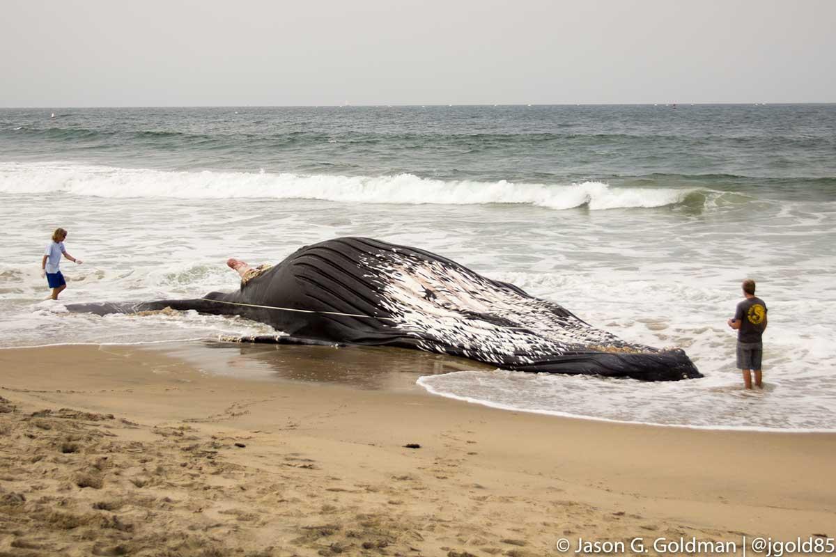 dockweiler-whale-7-1-16.jpg