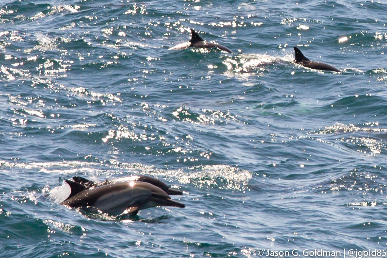 dolphins-4-12-16.jpg