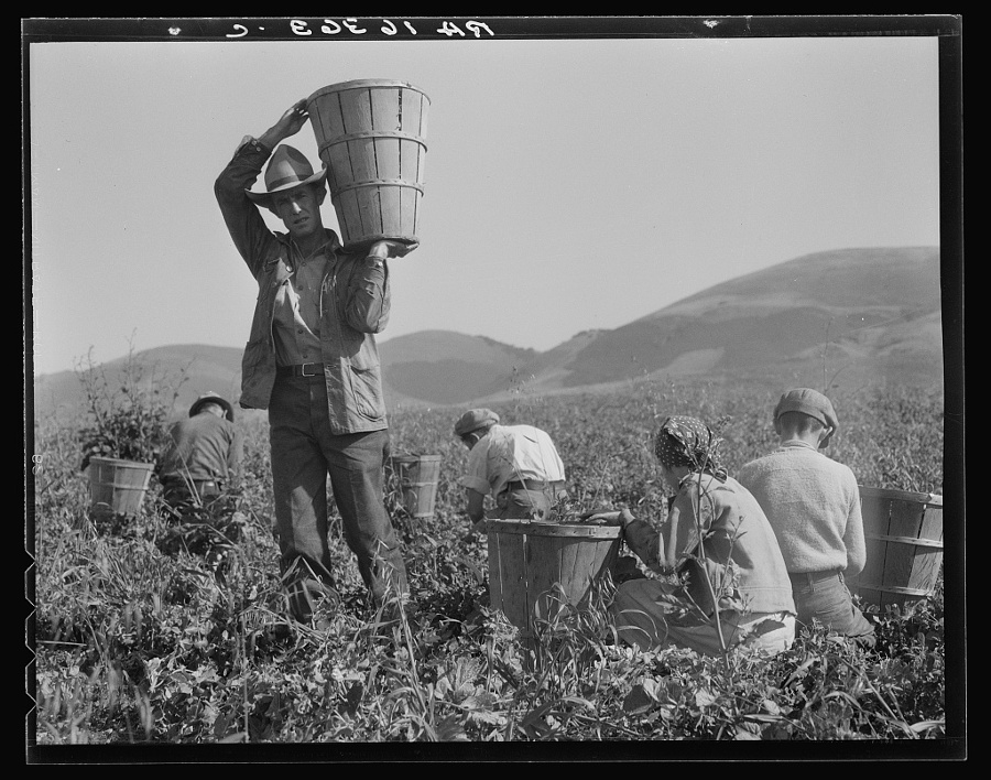 "Dorothea Lange, ""Pea harvest. Family at work. Nipomo, California,"" 1937. 