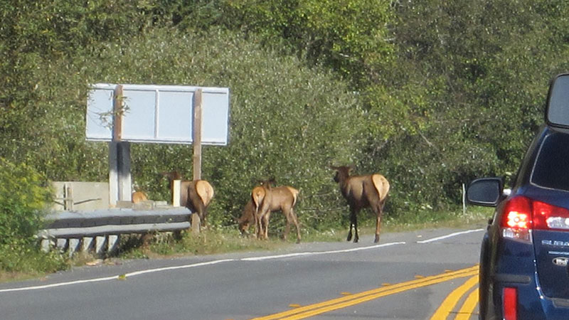 elk-crossing-10-28-16.jpg