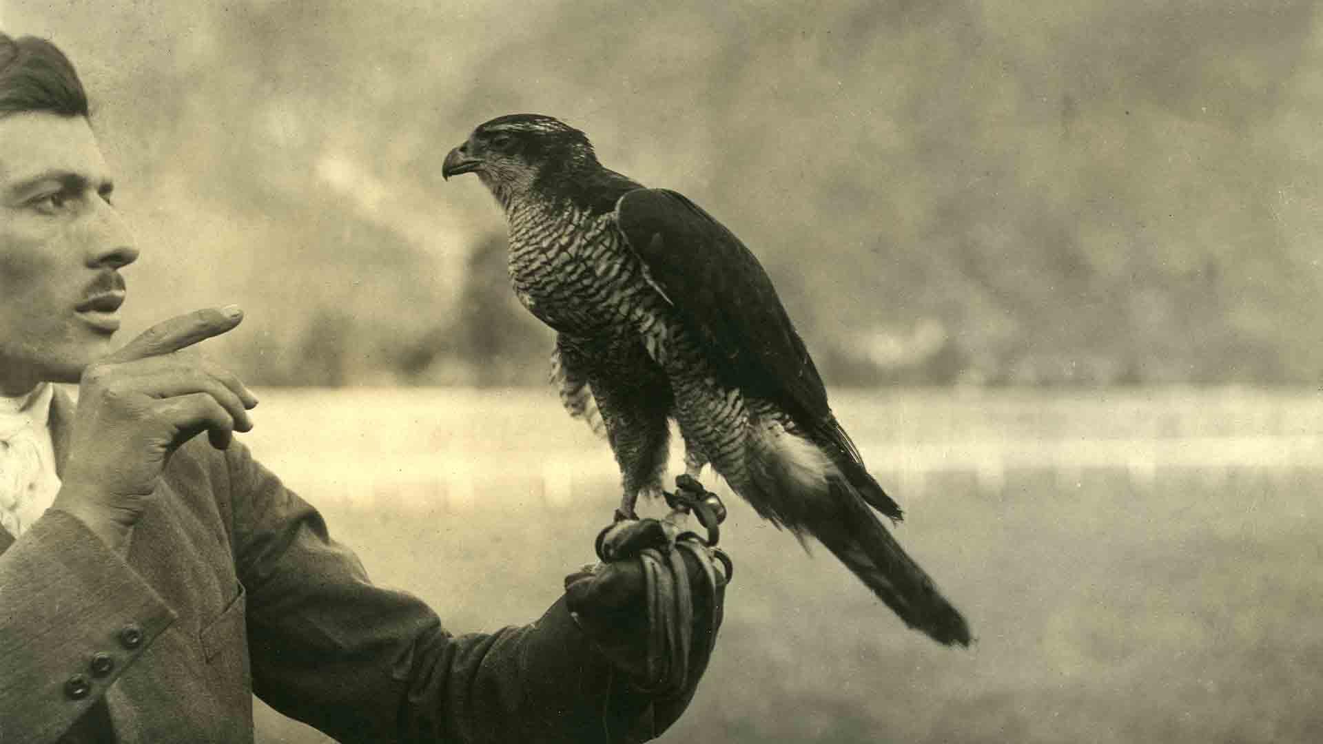 Hawker with his bird of prey.
