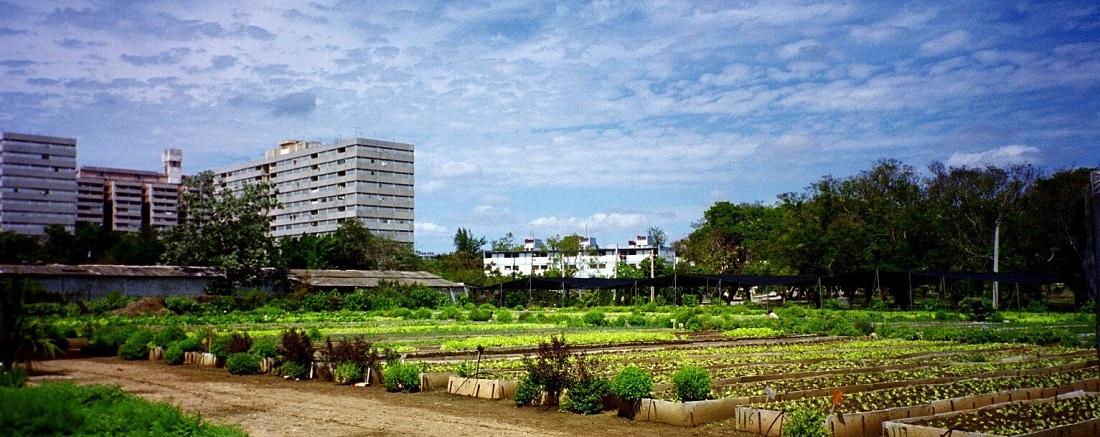 Cuba Urban Agriculture
