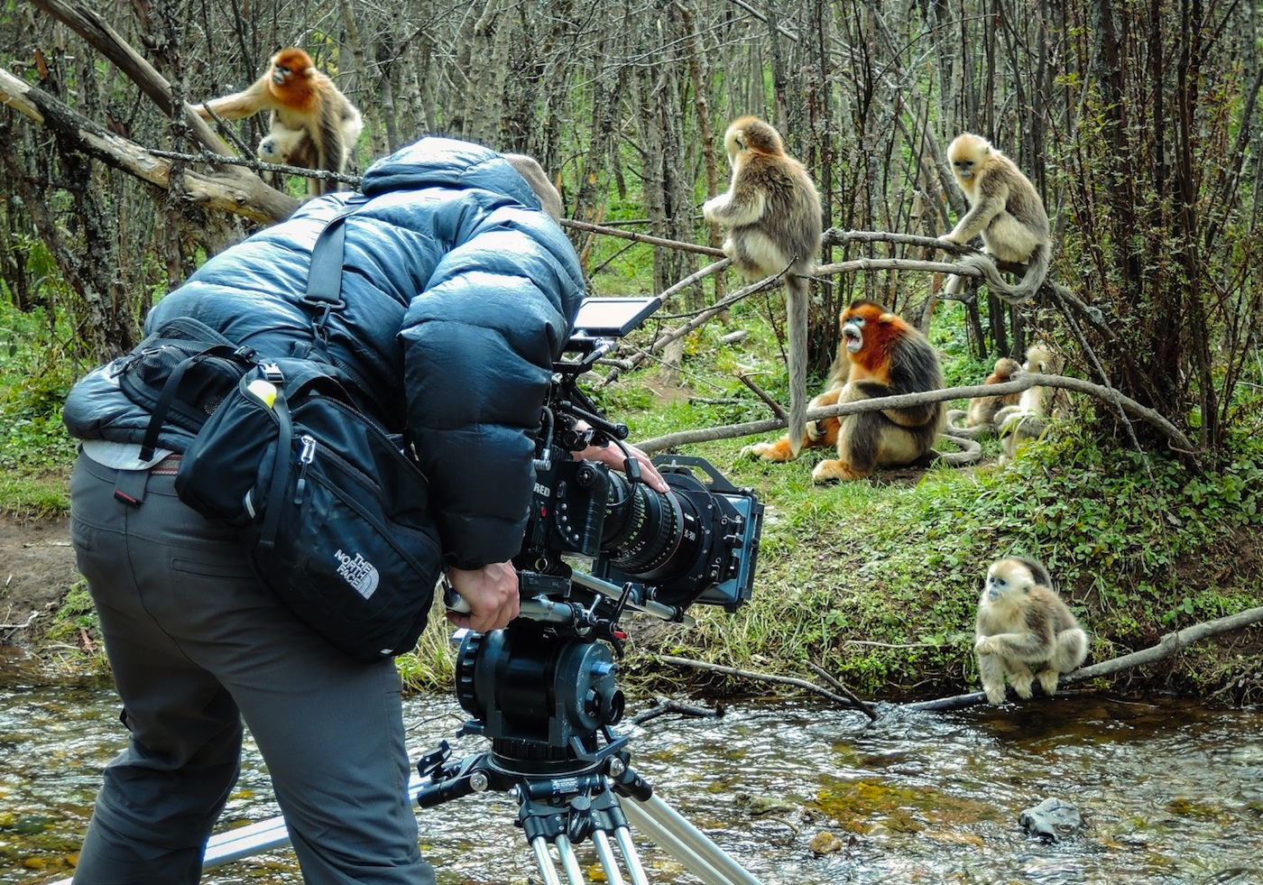 "Filming Disneynature's ""Born in China"""