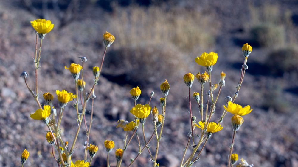 Wildflowers at Bonanza Spring | Photo: Chris Clarke