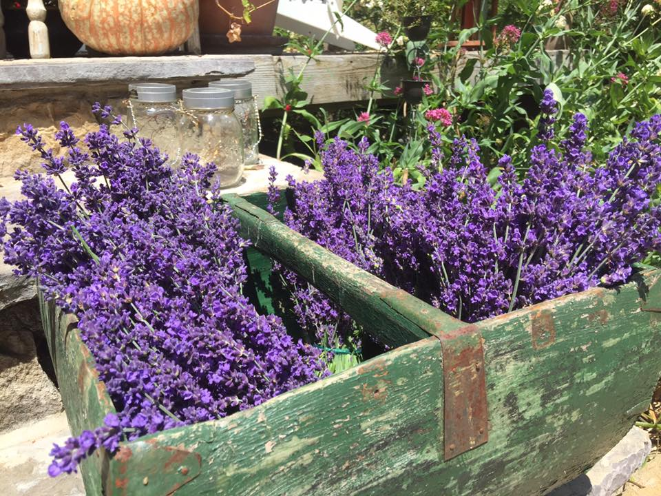 Courtesy Frog Creek Lavender Farm