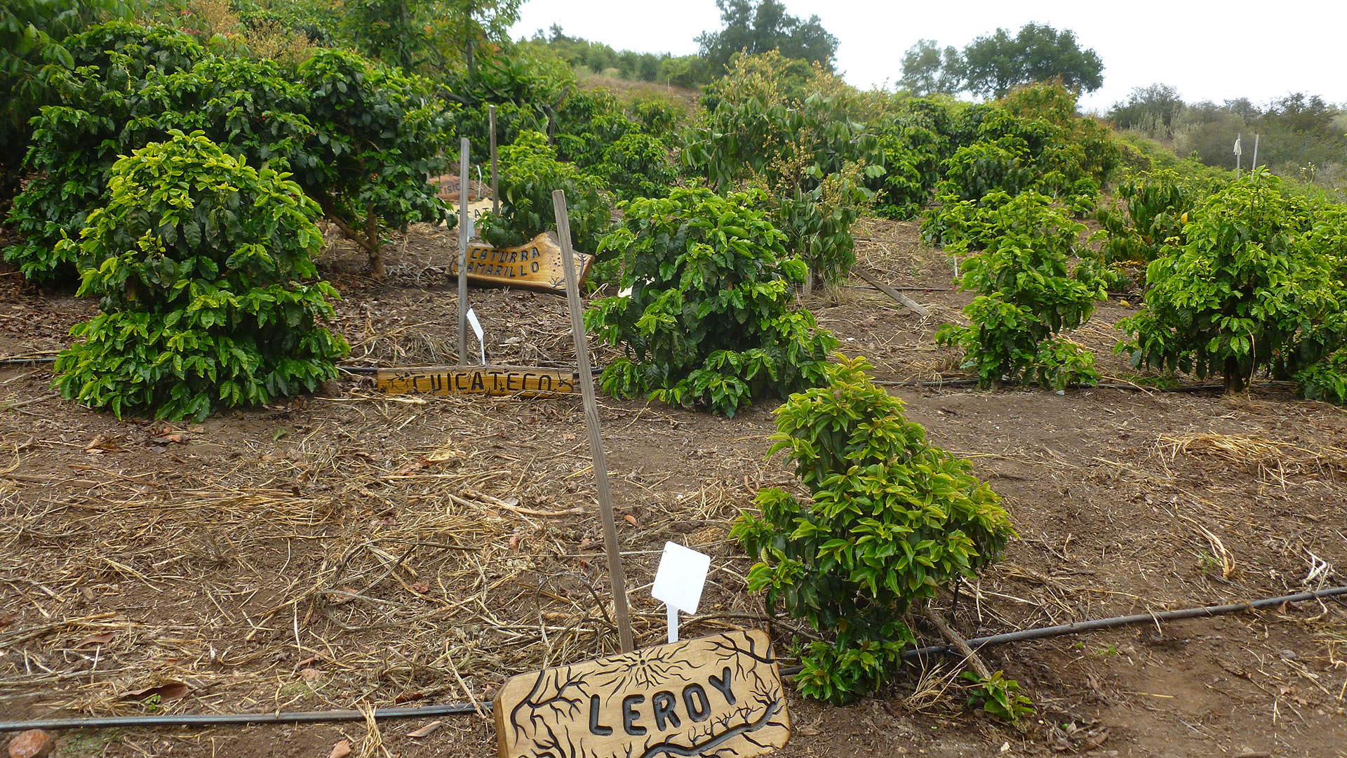 good land organics