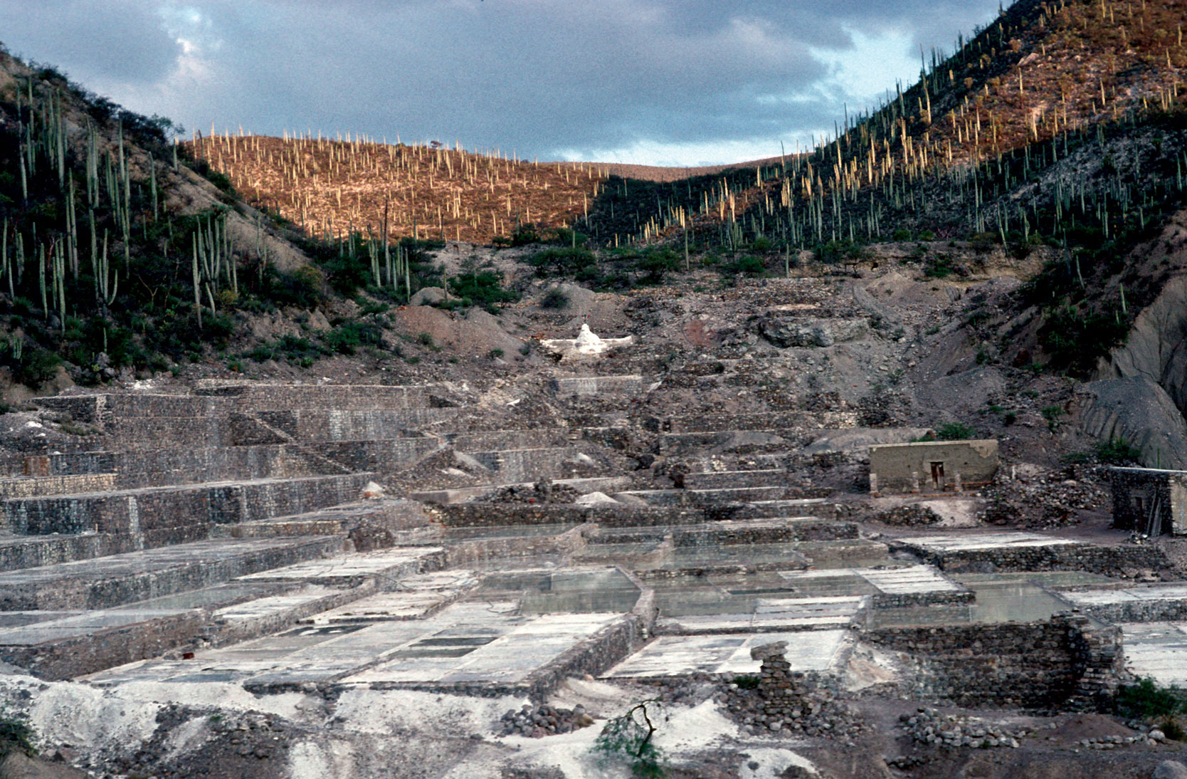 An archaeological site in Tehuacan Valley, Puebla, Mexico surrounded by large populations of Neobuxbaumia columnar cactus.
