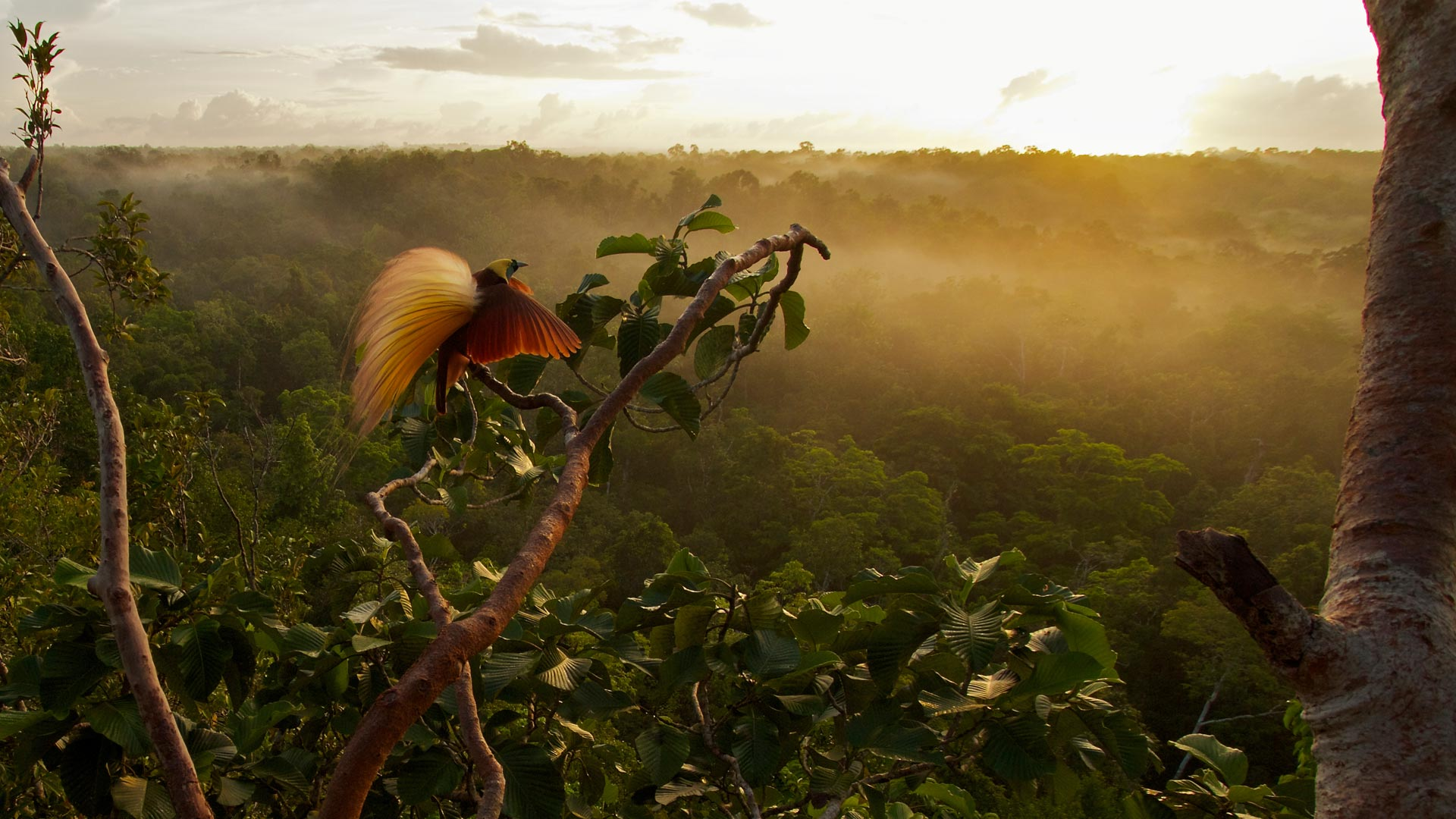 Ten Must-See Birds-of-Paradise | KCET