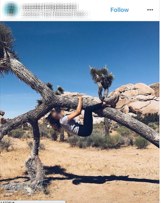 Person hanging from Joshua tree | Image: via Instagram