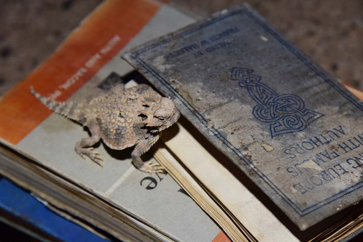 A horned  lizard on Hazel's books | Rachelle Skidmore
