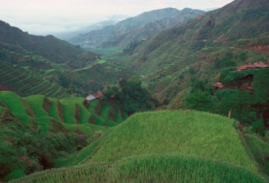 Heirloom rice terraces in the Philippines. Image courtesy of KCET's digital series FOOD FUTURES